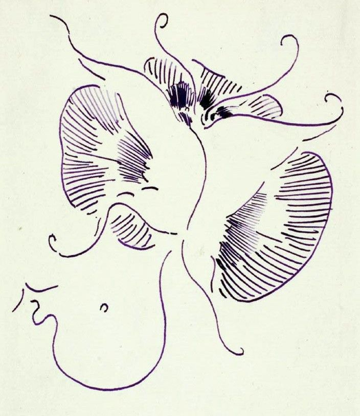 whistler-butterfly-signature