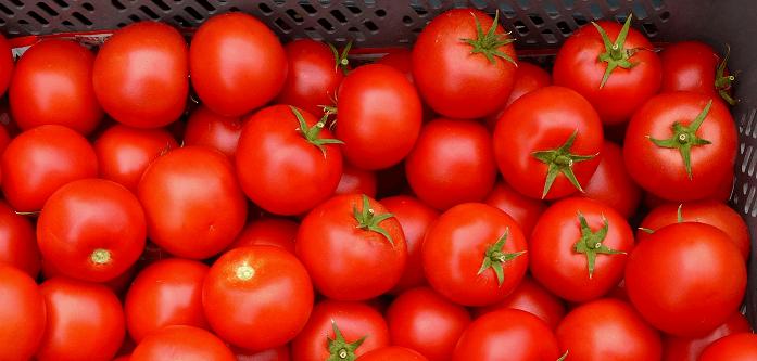 torba yasa ve domates