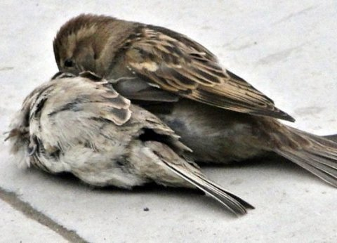 İki kuş