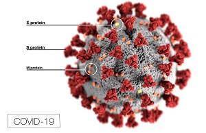 koronavirüsün yapısı
