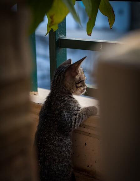 aralık- camdan bakan kedi
