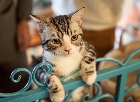 uçurum, kedi tırmanıyor