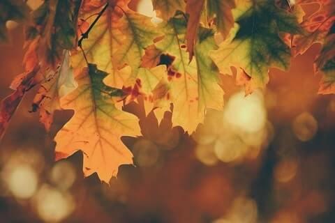 sararan yapraklar sonbahar