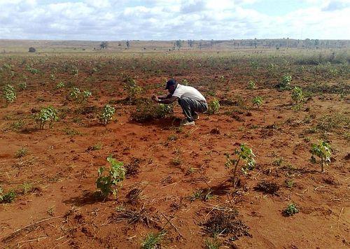 """Desertificazione, M5S: """"Dal governo solo parole e zero azioni"""""""