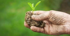 Dl Agricoltura: M5S, è una farsa bocciate le nostre proposte di buonsenso