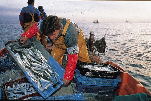 Pesca, Ok a nostre misure anti-crisi