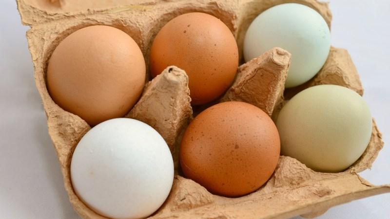Agroalimentare: Ok a risoluzione timbratura uova, controlli stringenti e trasparenza per consumatori e imprese
