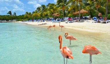 Hermosos flamencos en la playa de Aruba
