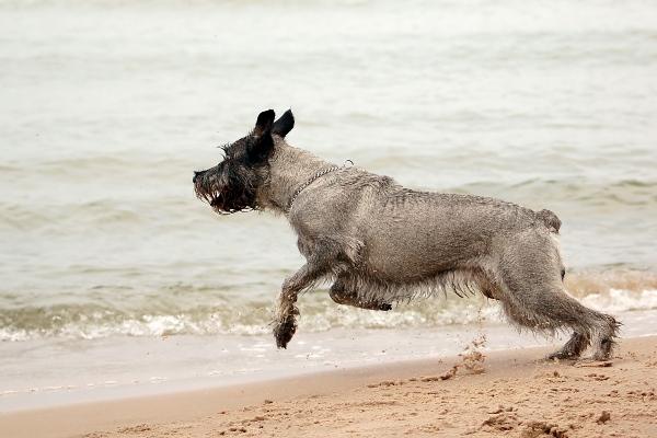 Cuidados para perros en playas