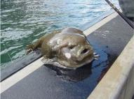 weird-deep-sea-fish1