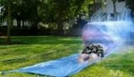 slip and slide? Ghost shark!
