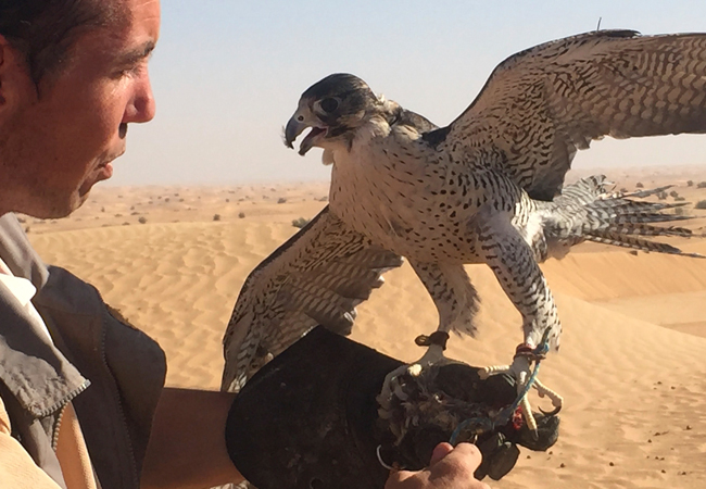 Maria the falcon with her falconer, James