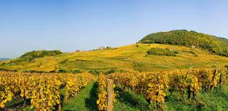 Vini del Jura.  La Francia più rurale ora fa tendenza.