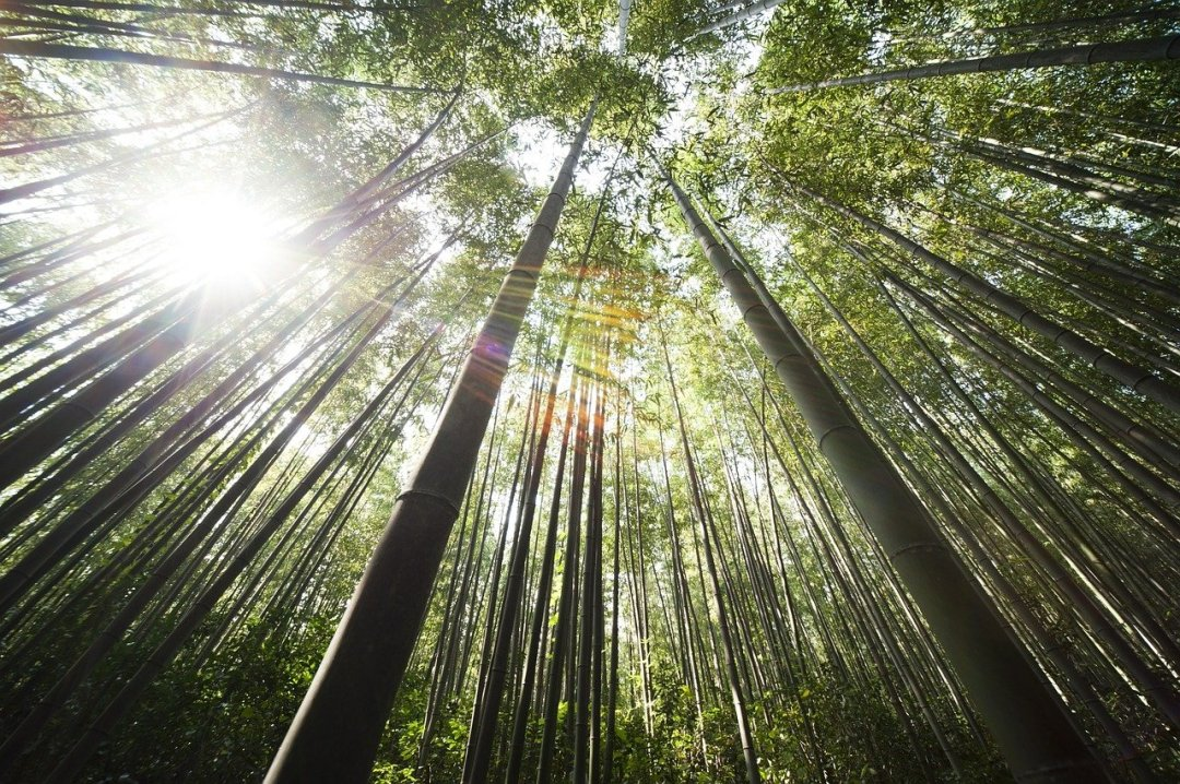 #PausaRacconto: Tina, Laia, Elise e la casetta di bambù (immagine via Pixabay)