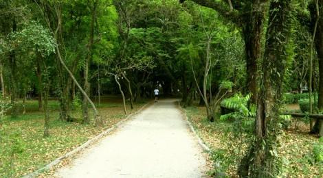 Pista de Cooper no Parque Ibirapuera. Percurso de terra, 1.2km. Foto Joannis Moudatsos
