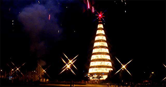 Árvore de 2007. O que esperar da 2014? Foto Fedbov (cc) detalhe