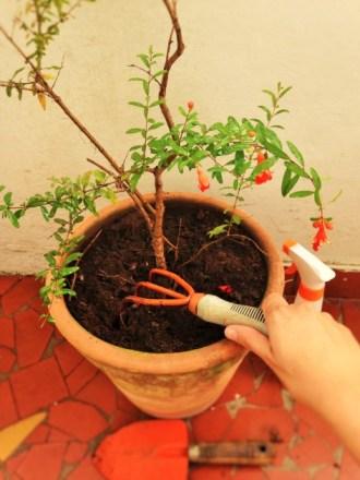 atendimento às plantas
