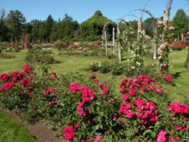 Vista parcial do jardim das rosas do Elizabeth Park (Hartford, Ct). Foto: Roberto Carvalho de Magalhães.