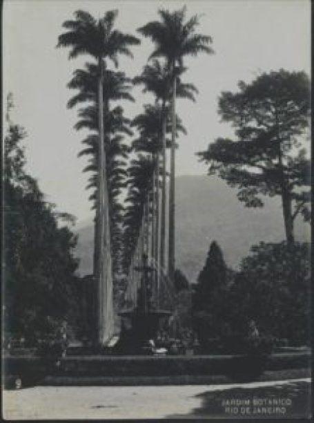 Palmeiras imperiais do Jardim Botânico do Rio de Janeiro fotografadas por Antônio Caetano da Costa Ribeiro, em 1914. Acervo Biblioteca Nacional.