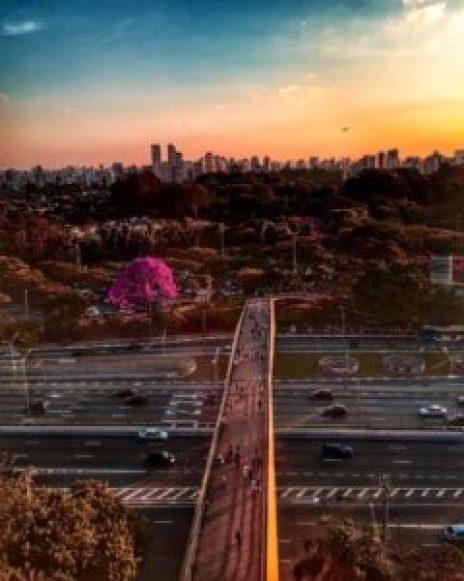 Vista do Parque Ibirapuera a partir do terraço do MAC, com um ipê-roxo em flor junto à passarela sobre a Av. 23 de Maio. Foto: Adriana Parmejane.