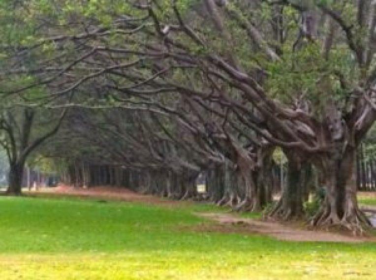Parque Ibirapuera. Foto: site Áreas Verdes das Cidades.