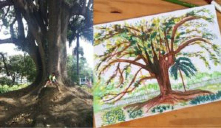 Pedro sentado à sombra do extraordinário ceboleiro, árvore nativa da Mata Atlântica, e a mesma árvore num desenho feito por sua mãe, Cecília Monte Alegre.