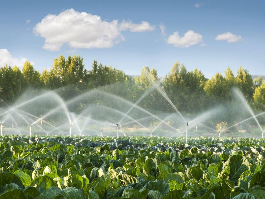Farm Pond Water Quality