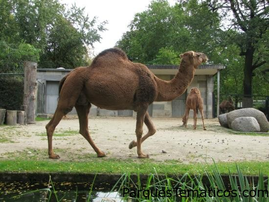 Zoologischer Garten (Berlin Zoo)   Berlín, Alemania