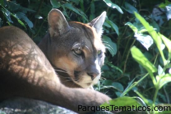 Gramado Zoo   Gramado, Brasil