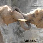 Elefantes Africanos