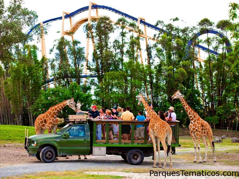 Tours VIP en Busch Gardens, Tampa