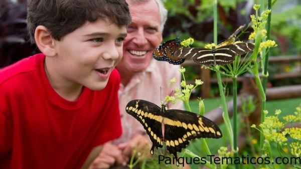Mariposas en Animal Kingdom
