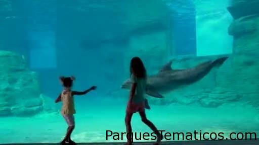 Clearwater Marine Aquarium presenta el nuevo hogar de Winter the Dolphin