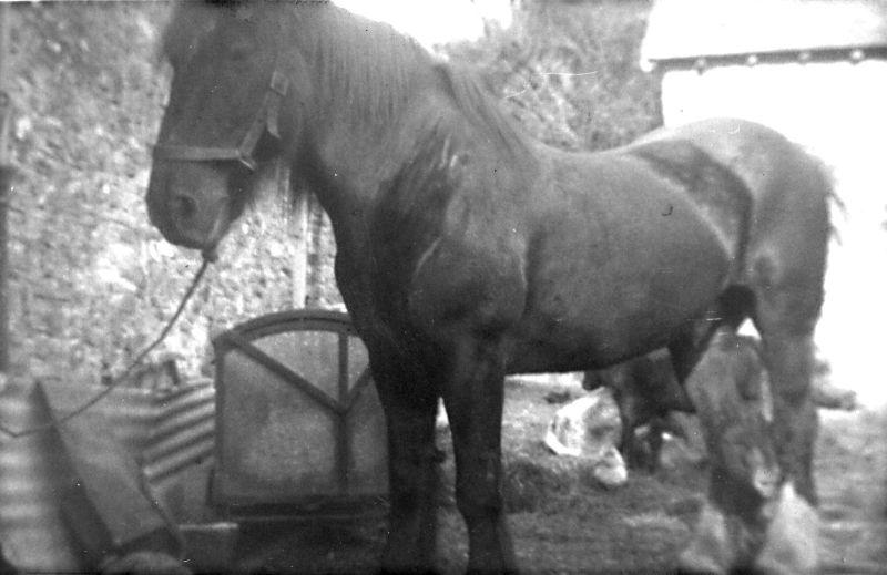 Working horse - kind permission of John Petherick