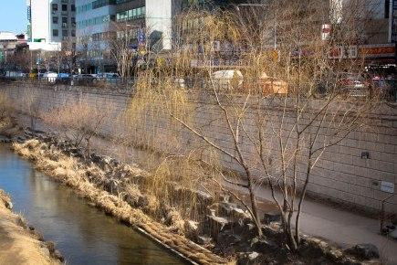 Cheonggyecheon willow