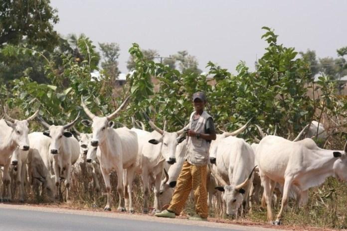 I'm a 'herdsman' — not all herdsmen are bandits