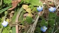 Spring wildflower surprise