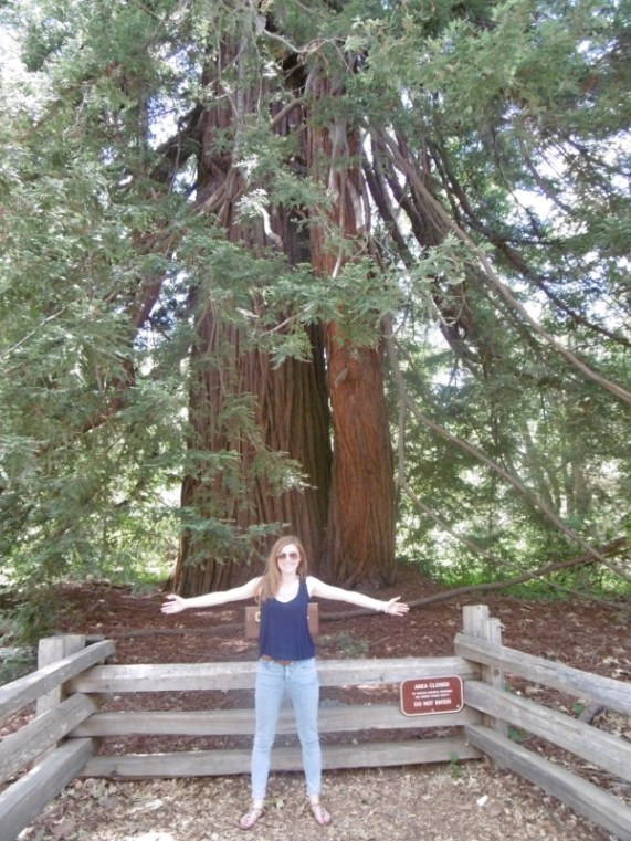 Pfeiffer Big Sur State Park redwoods