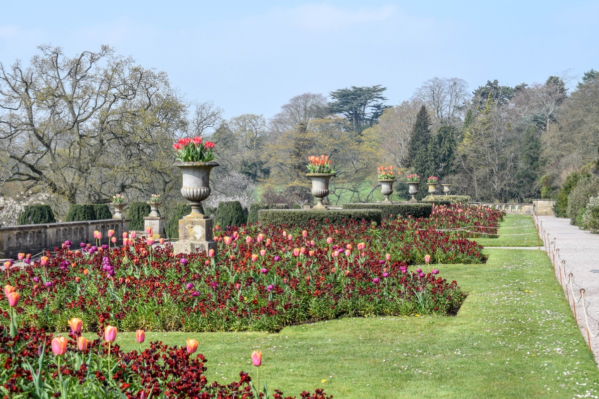 Flowers in The Terraces at Tyntesfield in Spring