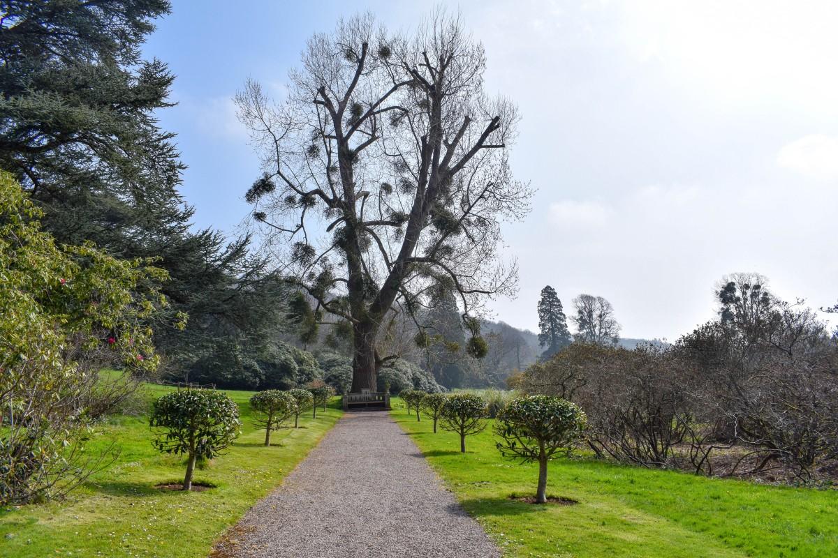 Tyntesfield gardens