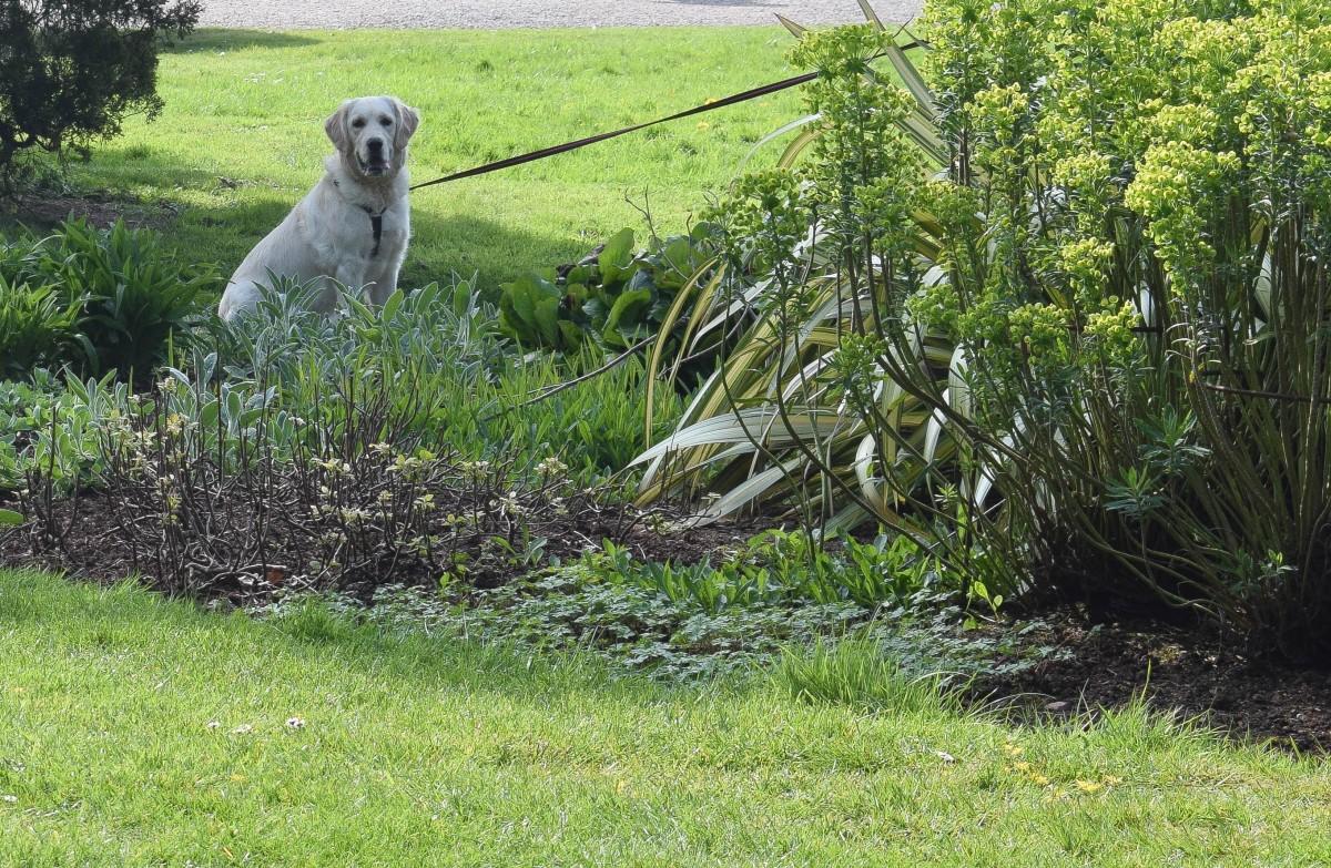 Dog-friendly Tyntesfield