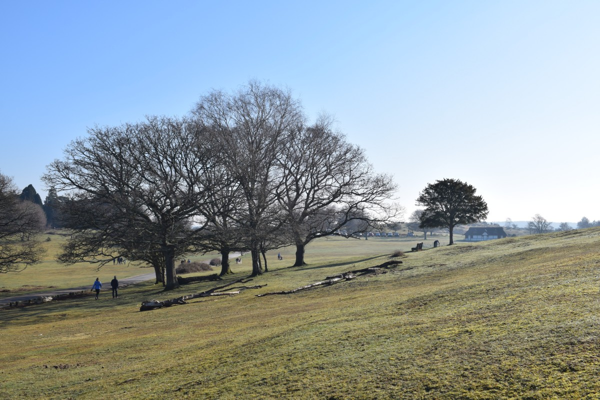 views from boltons bench lyndhurst new forest