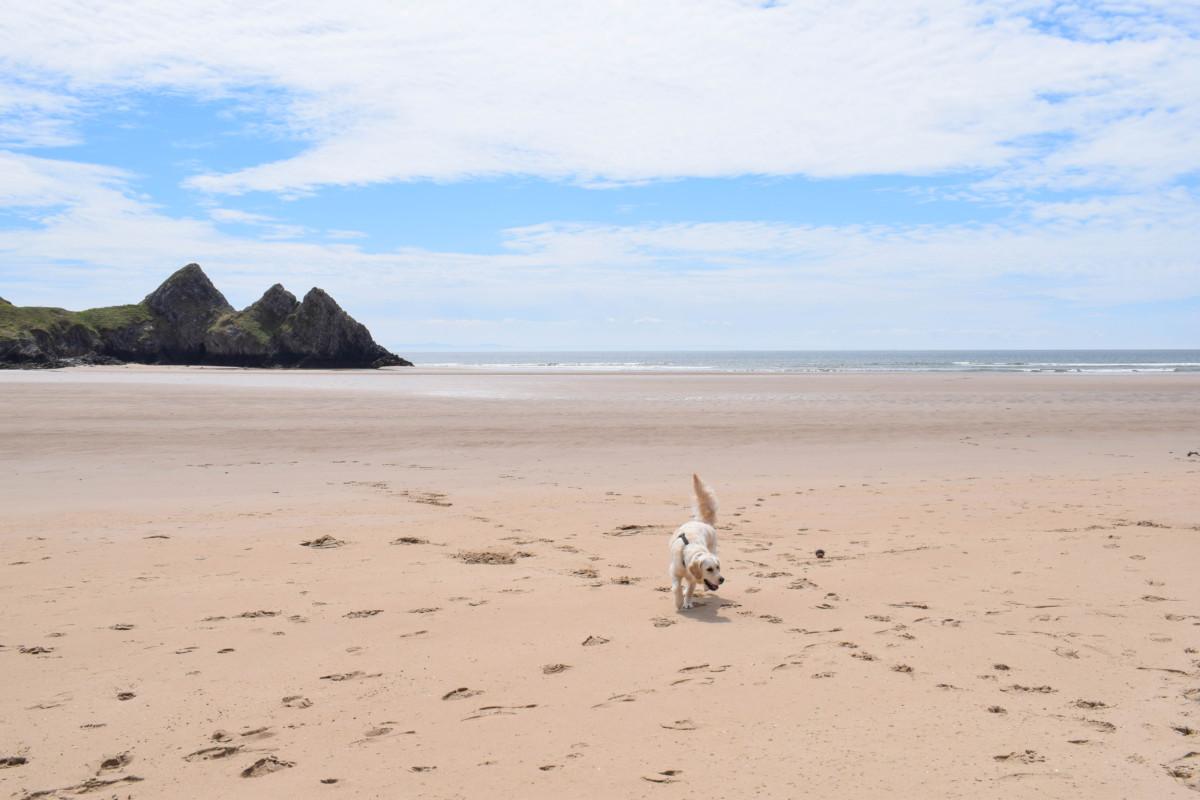 Three Cliffs Bay dog-friendly Gower Wales