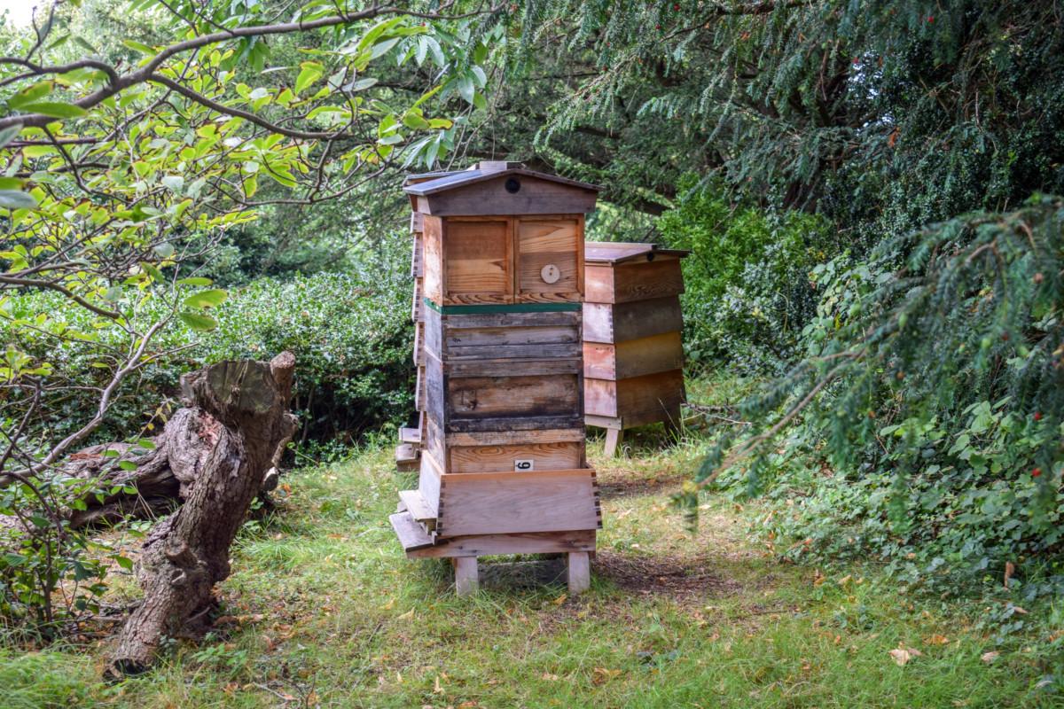 Bristol Botanic Garden bees