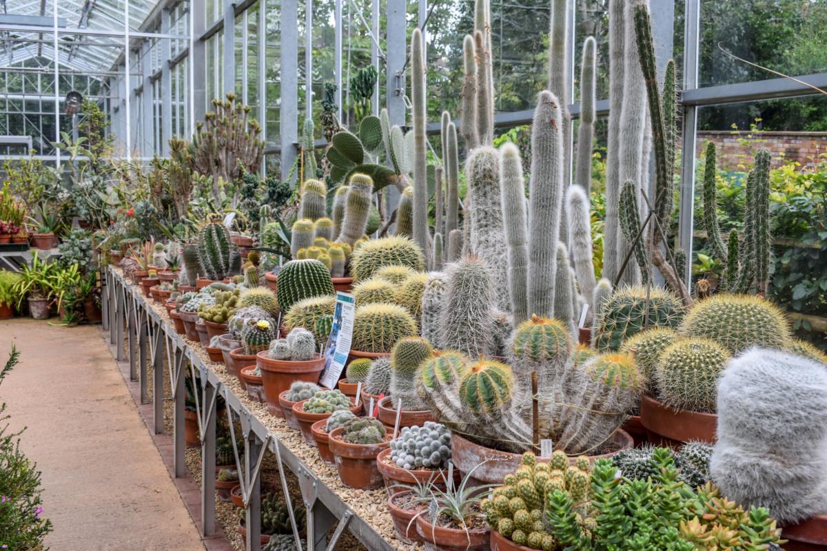 Bristol Botanic Gardens cacti