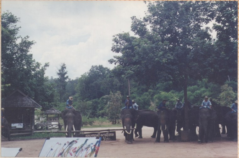 Painting made by Elephants