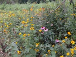 A native plants meadow