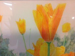 "CHECK OUT THE CLASS ""DRAWING WITH COLORED PENCILS"" STARTS JANUARY 5TH"