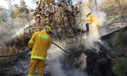 Hay 79 incendios activos en todo el país: CNPCyB