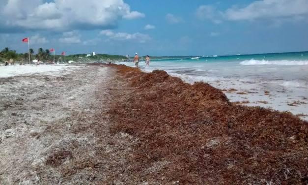 Sargazo en Quintana Roo se magnificó para afectar al gobierno: AMLO